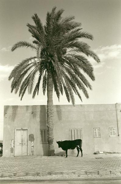 MAIN STREET, Mersa Matruh, Egypt 1991