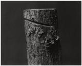 Wood #2, 2004