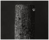 Wood #3, 2004