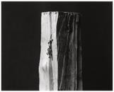 Wood #8, 2004