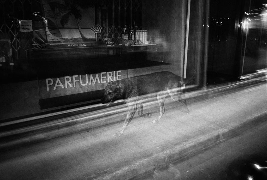 Ghost Dog, Arles