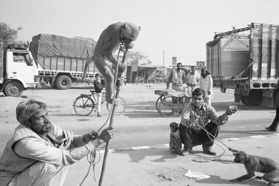 Monkeys and Handlers on road to Agra