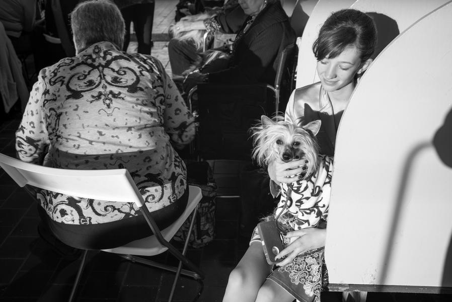 Chinese Crested Patterns, New York, 2014