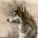 Wolf #2, 30x30