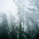 Fog, Muir Beach, California