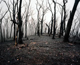 2009 Black Saturday bush fires.