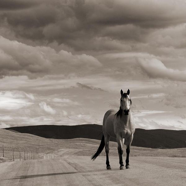 Horse & Sky