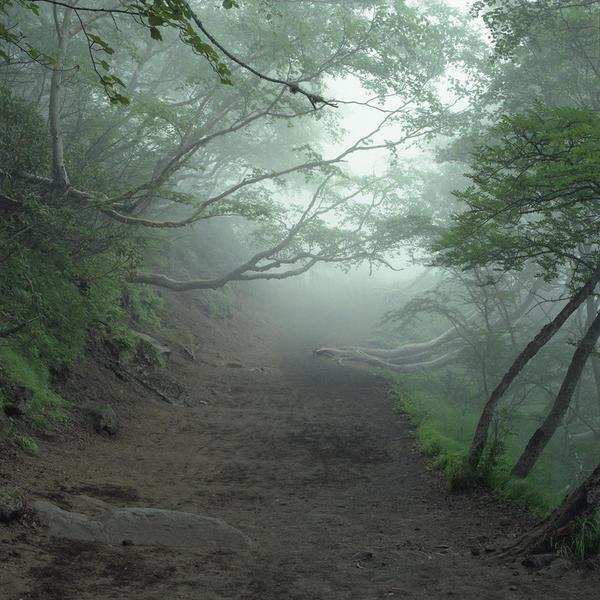Aokigahara, 2008