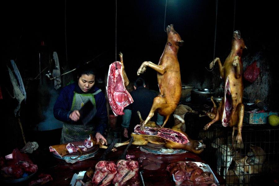 Dog butcher