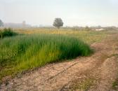 Grassland II 45172_3