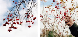 Untitled diptych, from