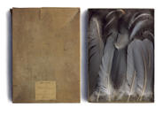 Feathers of Great Blue Heron