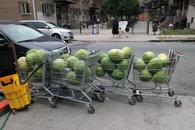 watermelon parade, 2011