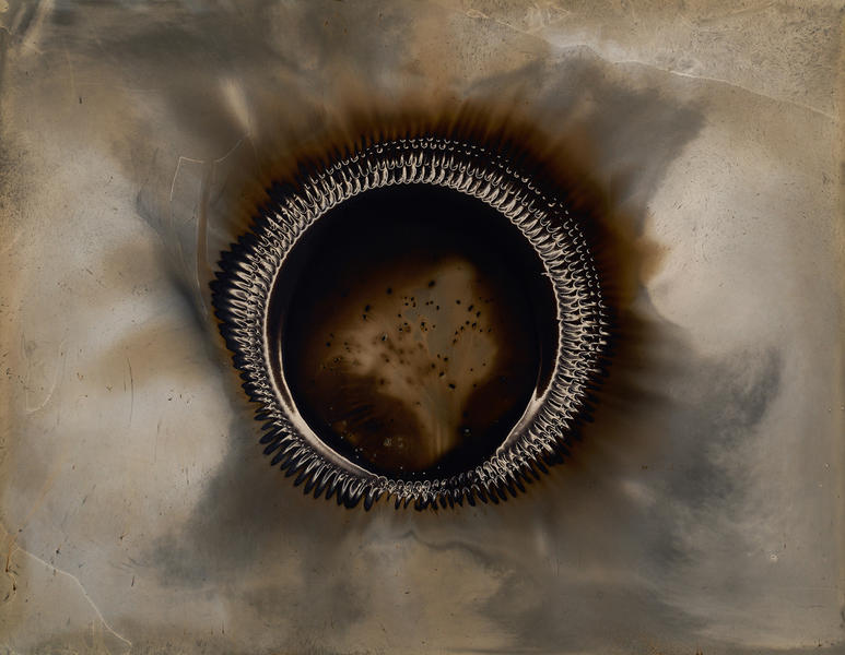Ouroboros #3 24.5x32 2016