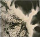 Untitled W.O.F .05-08-13 8x8.5 2013