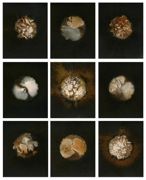 Variant Grid 9 (10x8) gelatin silver prints 2014
