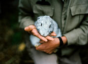 Holding Rabbit