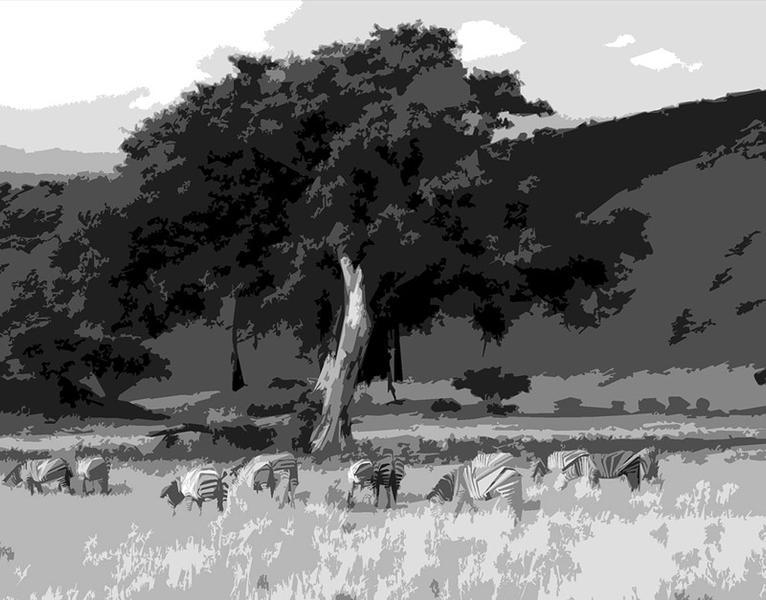 Zebras and Tree