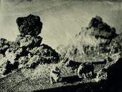 Rhimoceros, laufskalavarda Iceland