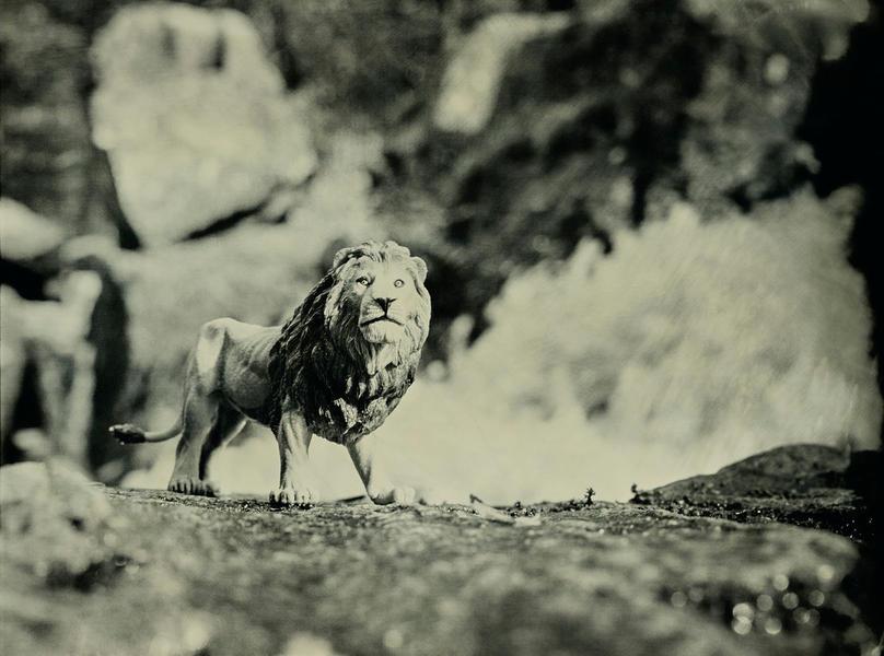 African Lion, Danska Fall Sweden