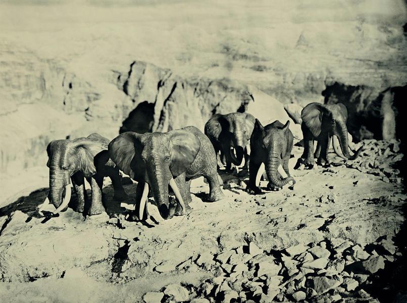 African Elelphants, Dolomites Italy