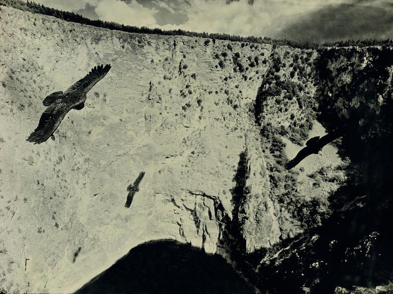 California Condors, Imotski Croatia