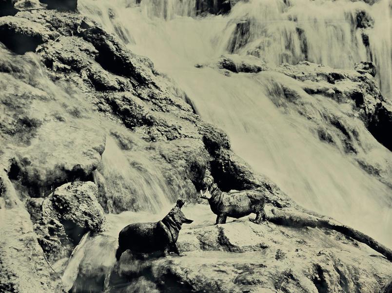 Hippopotamus, Krka Falls Croatia