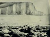 Leatherback Sea Turtle, Seven Sisters England