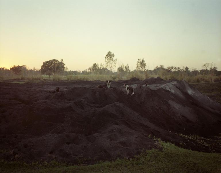 Dogs; Dhampur, Uttar Pradesh, India 2011