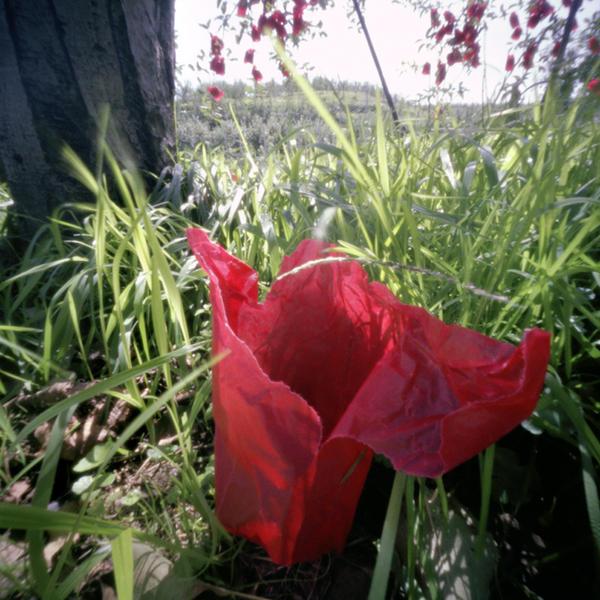 Red Inner Bag #1, Fall, Aomori Prefecture