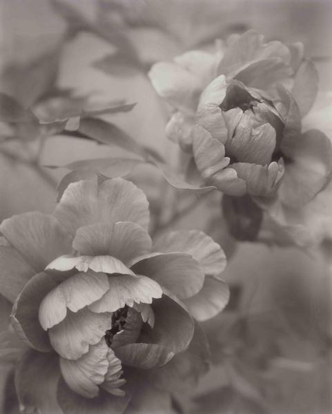 Venerable Flowers, Berkeley, 2008