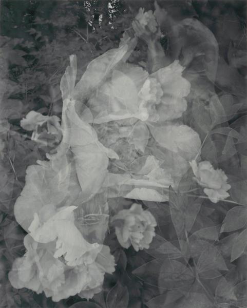Breathing in Flowers, Linwood Gardens, Pavilion