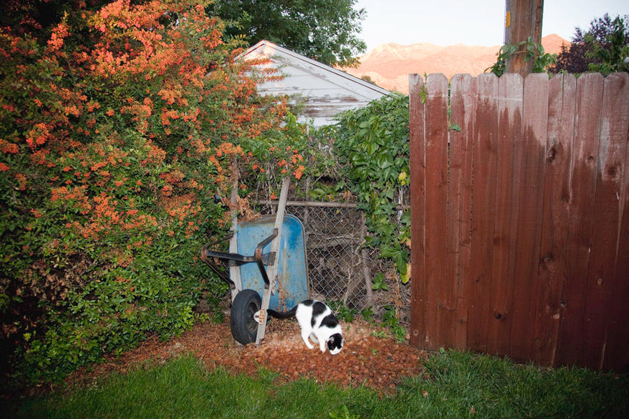 White and Black Cat, Ogden, Utah 2010