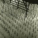 #4 rice planting