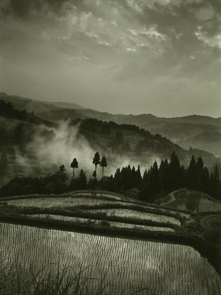 #5 rice terrace