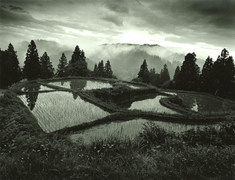 #6 rice terrace