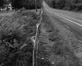 Bent Guardrail, Rt. 199