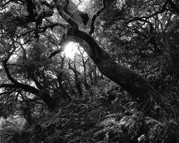 Cusp, Redwood Park