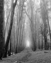 Shrine, Presidio Forest