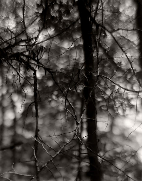 Branches Web