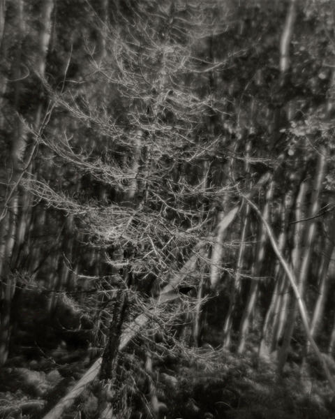 Tilted Forest