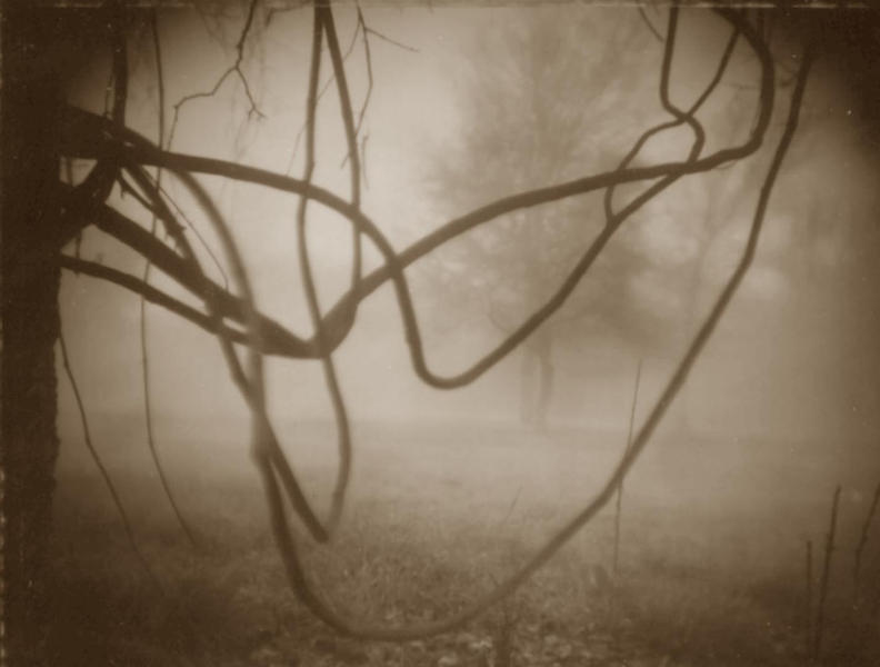 Fog and Vines