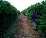 Farm worker, Yesod Ha'Maale, Israel, 2012