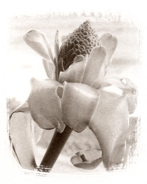 Torch,  Platinum/Palladium print