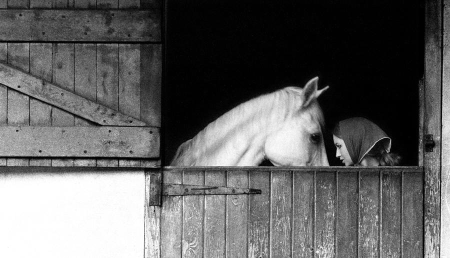 'November Girl' (1967) Horse and Stable