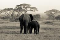 AFRICA Kenya & Tanzania