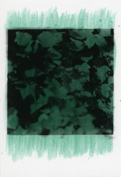 Ivy, Ebers Road (green)
