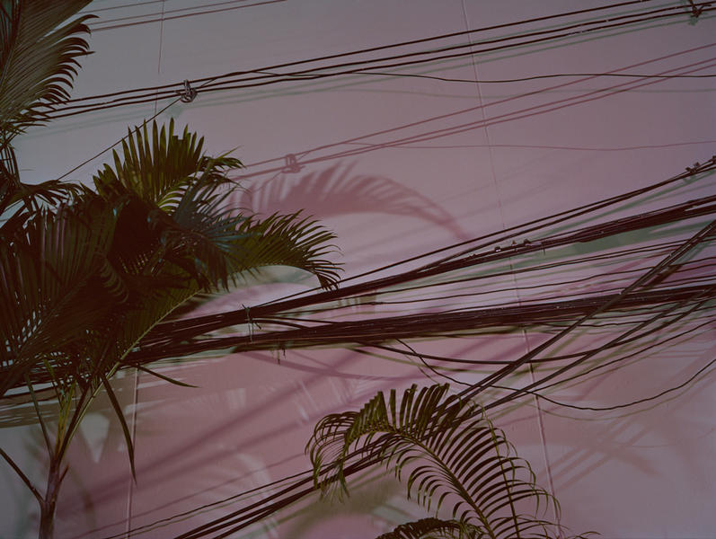 Palms, from the series Silence Has An Echo, 2010