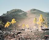 El Teide, view #15