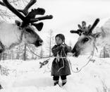 Tool holding two reindeer, Mongolia 2007